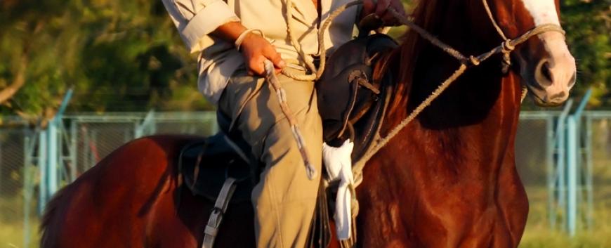 Cuba-horses-travel-11.jpg