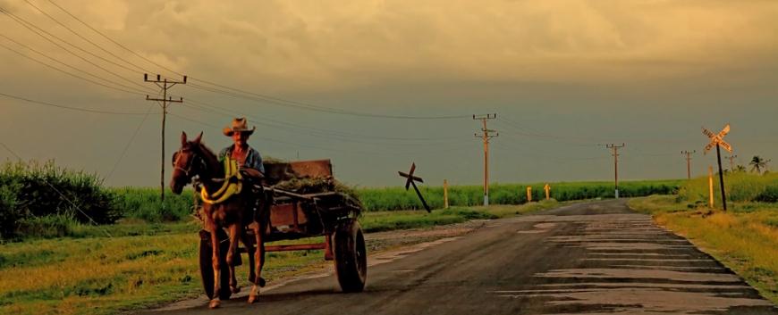 Cuba-horses-travel-12.jpg