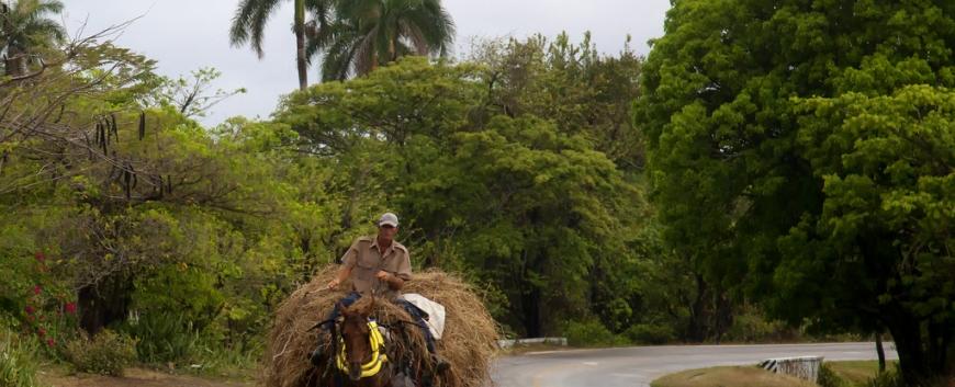Cuba-horses-travel-13.jpg