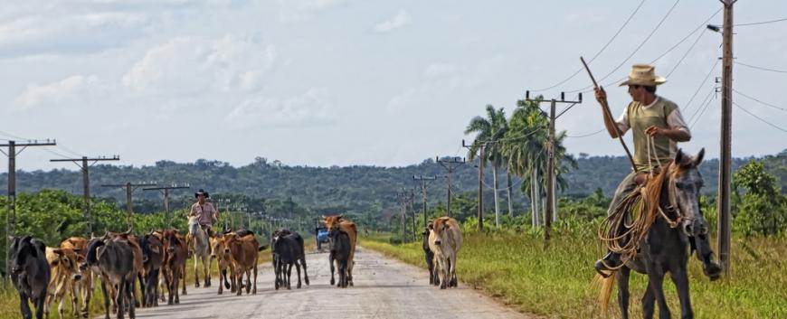 Cuba-horses-travel-14.jpg