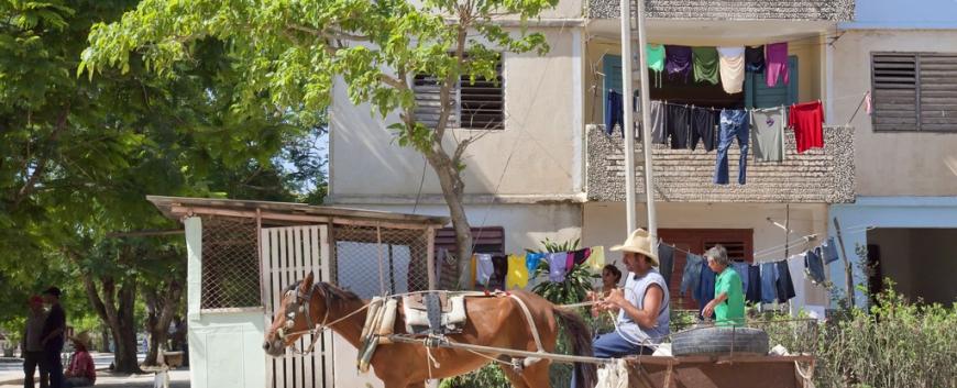 Cuba-horses-travel-15.jpg