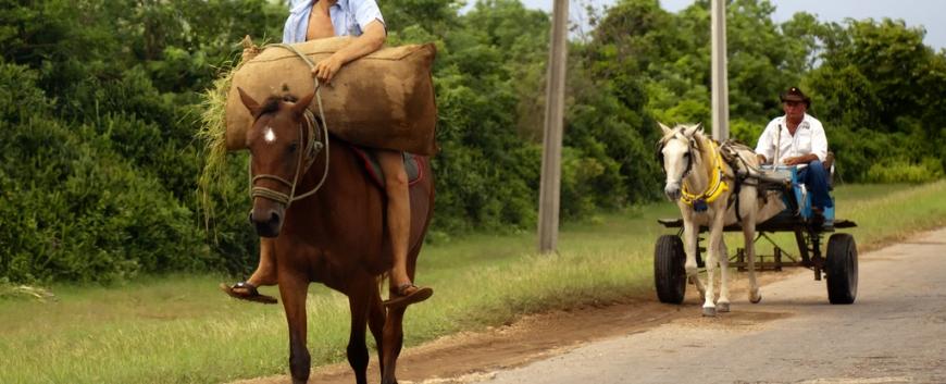 Cuba-horses-travel-17.jpg