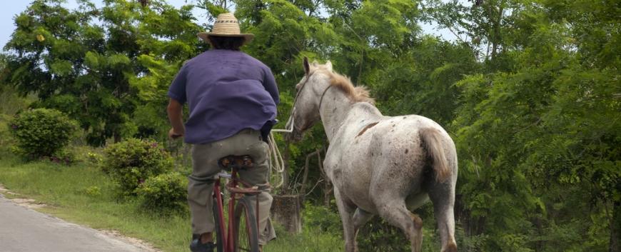 Cuba-horses-travel-18.jpg