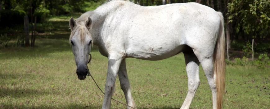 Cuba-horses-travel-19.jpg