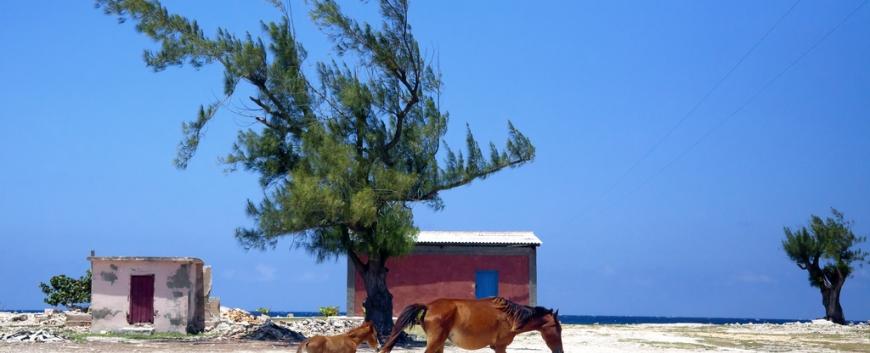 Cuba-horses-travel-20.jpg