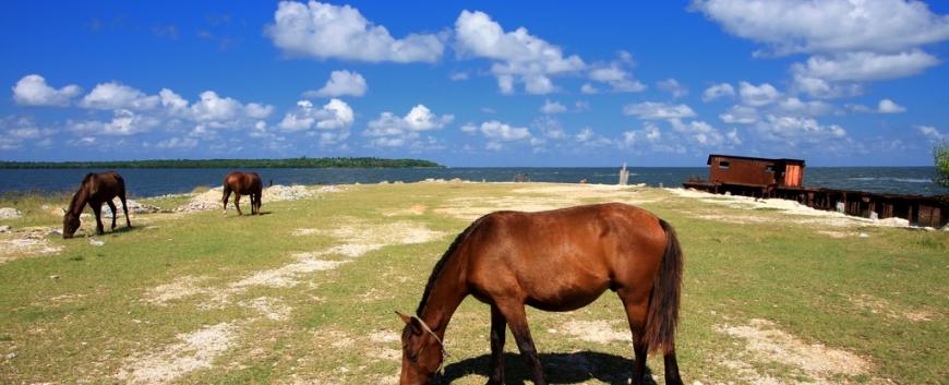 Cuba-horses-travel-3.jpg
