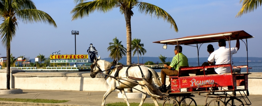 Cuba-horses-travel-4.jpg