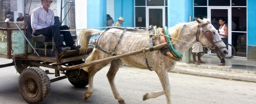 Cuba-horses-travel-5.jpg