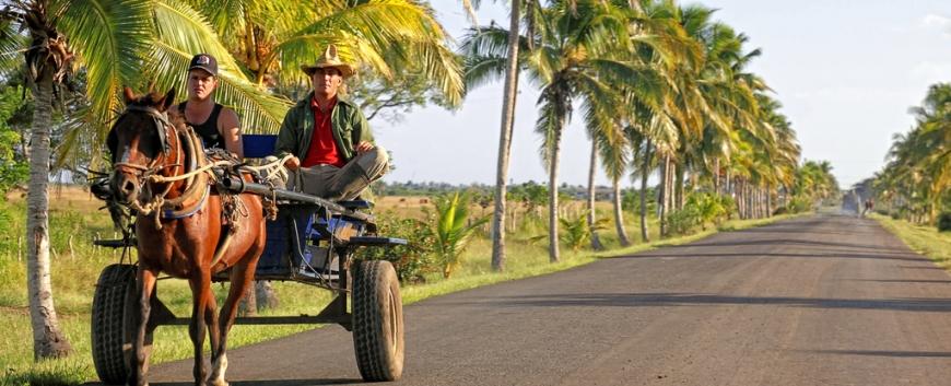 Cuba-horses-travel-6.jpg