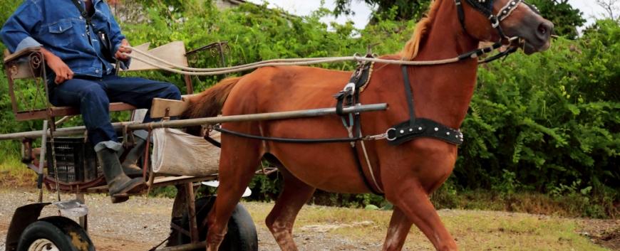 Cuba-horses-travel-7.jpg