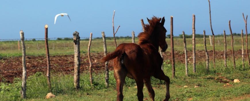 Cuba-horses-travel-8.jpg