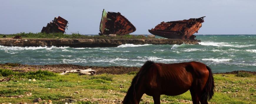 Cuba-horses-travel-9.jpg