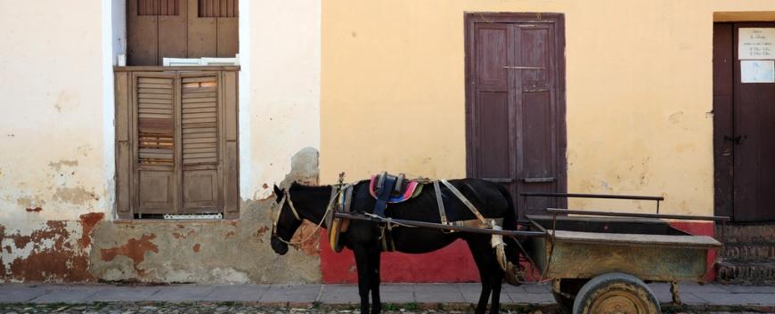 Cuban-horses-travel-1.jpg