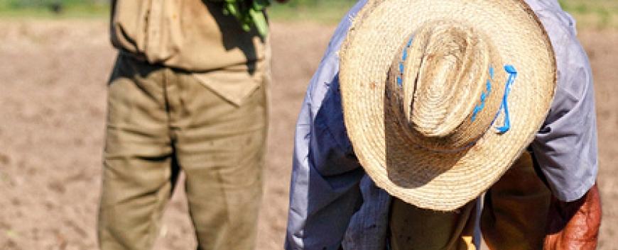 Guajiros planting tobacco.jpg