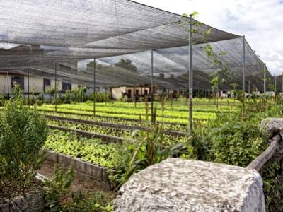 Havana Cuba Organic Farm