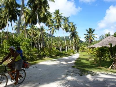 Seychelles Island palm trees