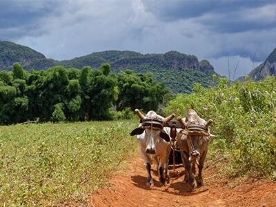 Organic Farm Cuba