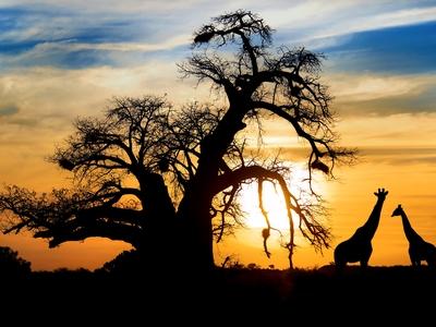 Giraffe Africa Kenya Maasai Mara Wild Game Safari