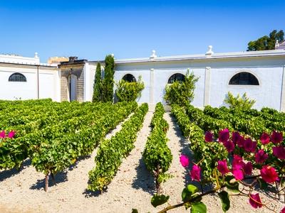 Jerez De La Frontera vineyards wine tasting travel sherry