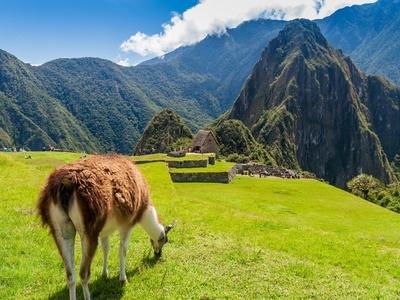 Llama mountain Machu PIcchu peru nature