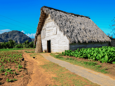 TOBACCO DRYING HOUSE VIÑALES VALLEY CUBA