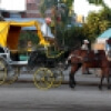 Bayamo Horse and Carriage