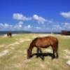 Horses in Caibarién, Villa Clara, Cuba